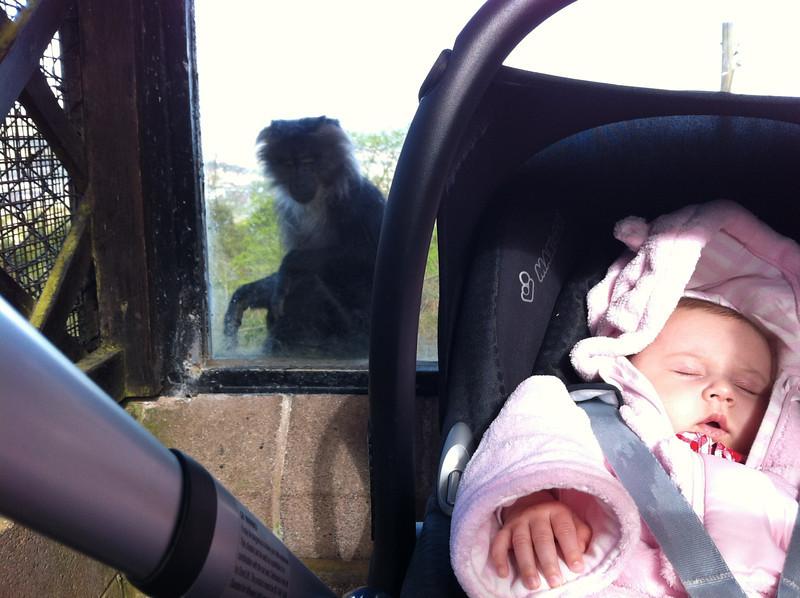 Eva at Belfast Zoo