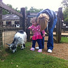 Chasing goats at Cotswold Wildlife Park