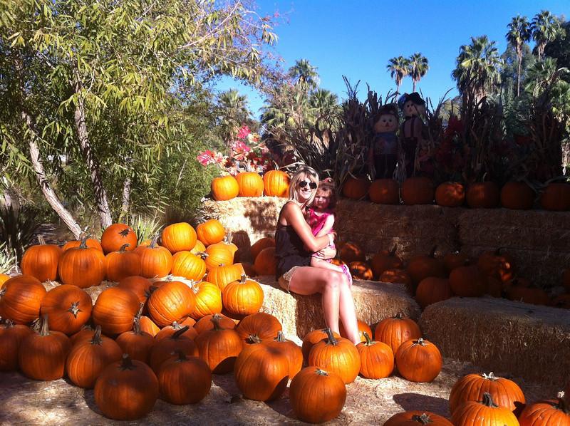 Pumpkin patch at Phoenix Zoo.