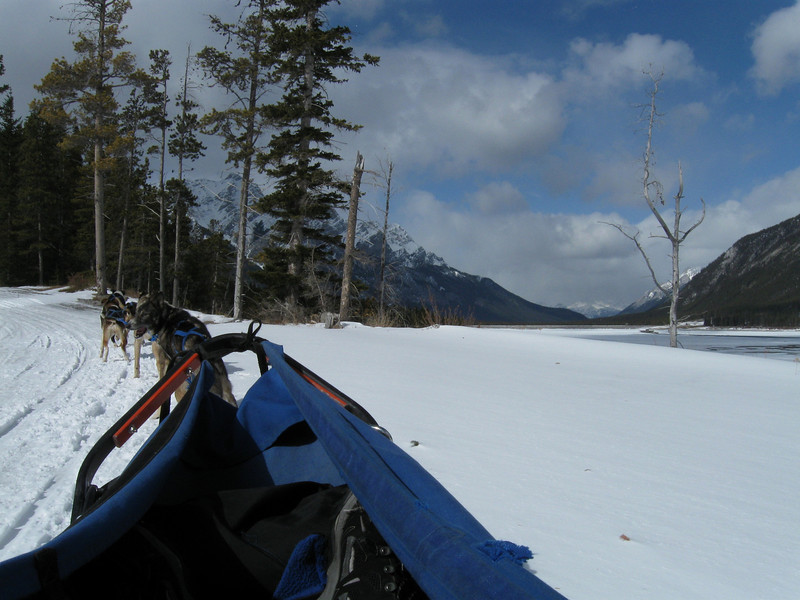 Dog Sledding on the trail at Spray Lake