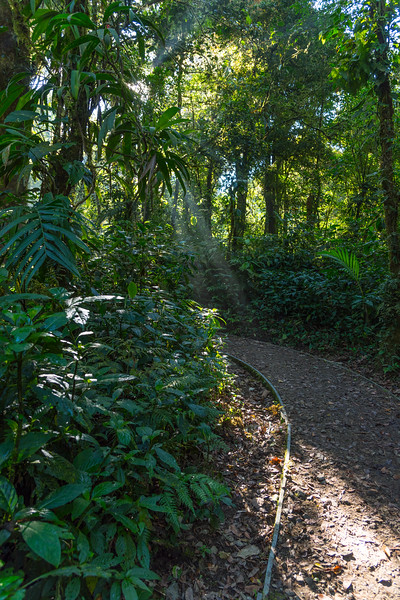 Sunray through the trees. Path in the forest in Costa Rica