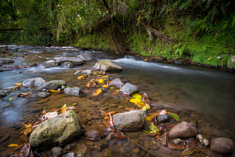 Small River with old leaves in Costa Rica