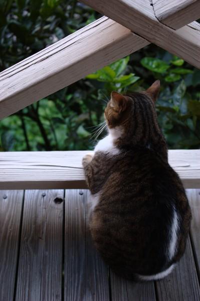 Utuado Cat