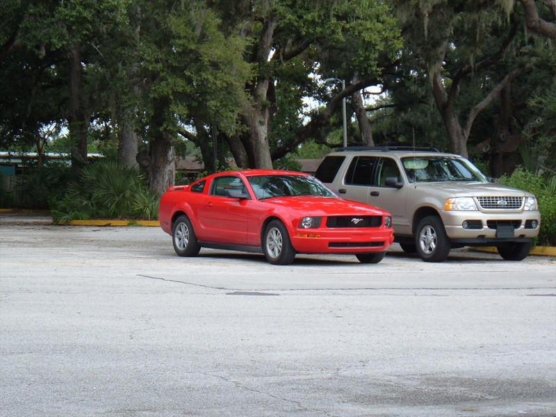 The Rental Mustang