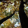 Fall Looking Up
