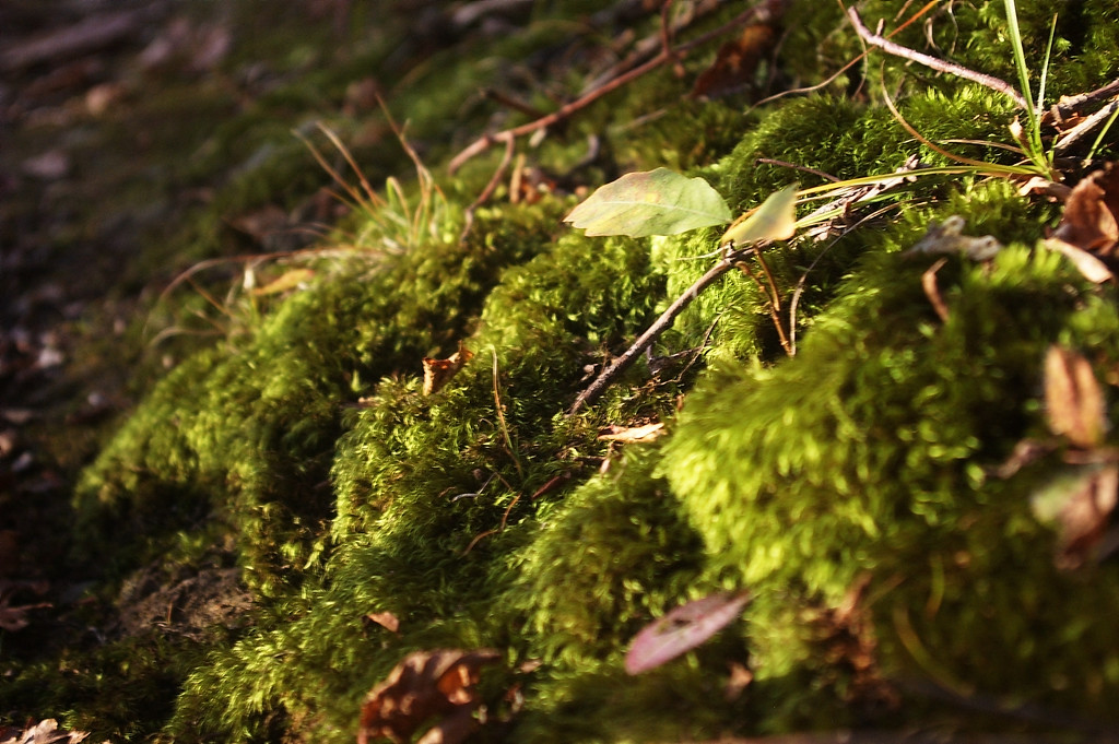 Lovely Moss in the Park