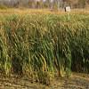Birdhouse in the Marsh