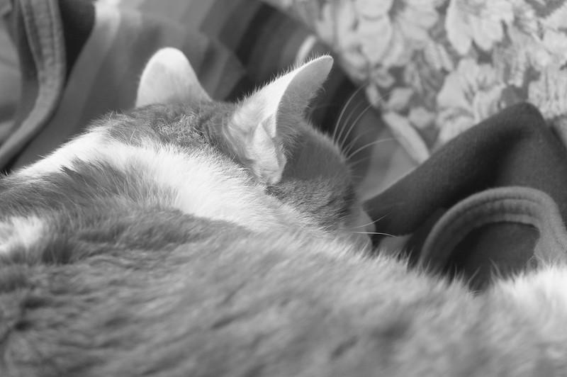 Thomas Sleeping Soundly