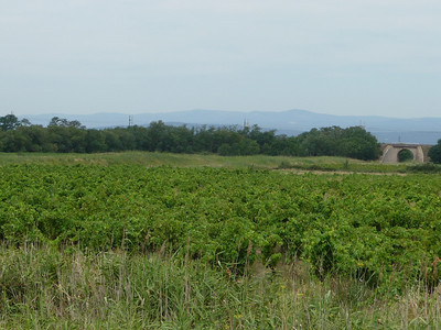 Vineyards as far as you can see