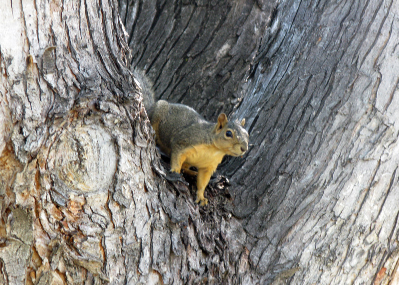 My day started with a conversation with a squirrel. He said it was a good day for a long walk and wished me good luck.........:-)