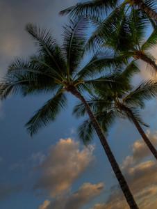 Jackie's trip to Hawaii-16