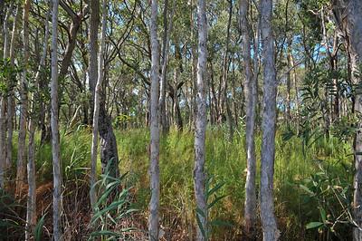 20091118-Nelson Bay