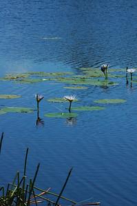 20091114-Nelson Bay-53