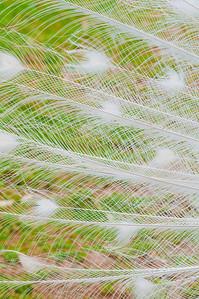 20091106-Featherdale Park-109