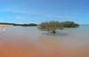 Mangrove at Broome