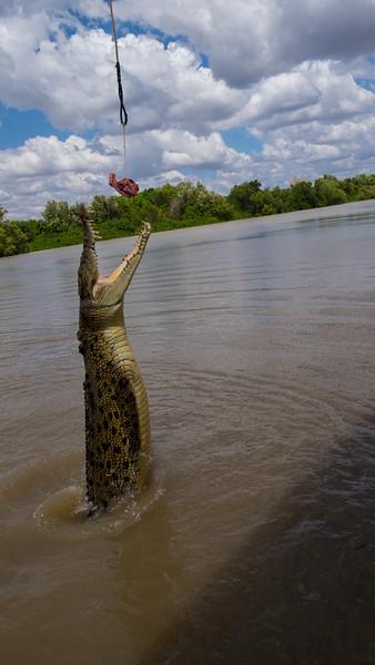 Adelaide River Jumping Crocs
