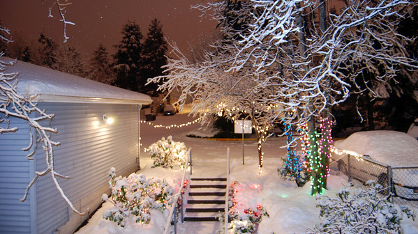 Beautiful!  You can barely see the lights on our bushes.