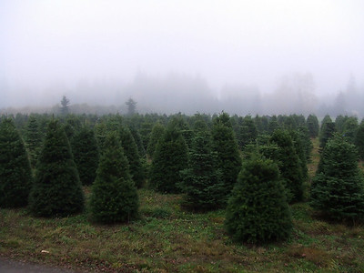 08, November 30th:  Finding the perfect Christmas Tree