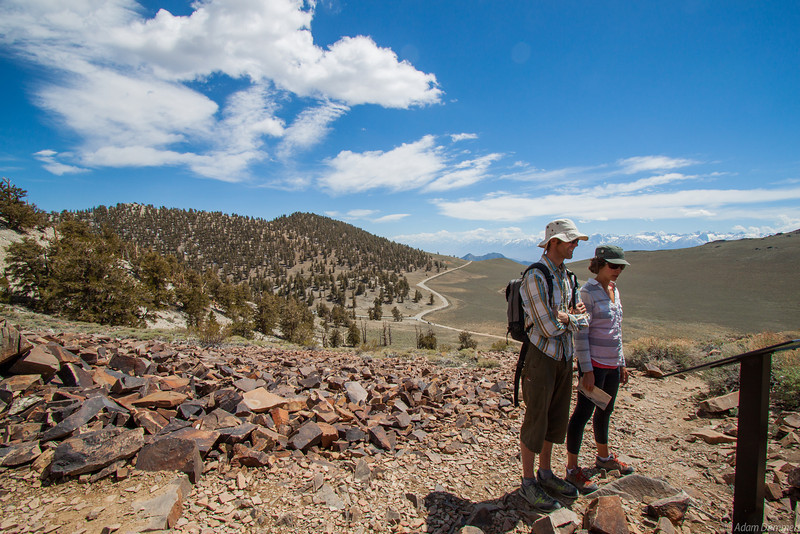 Chris and Pam at the Ancient Bristlecone Pine Forest on White Mountain.  Some are over 4700 years old.