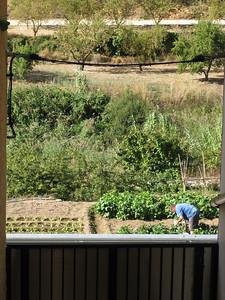 Veggie growing in Margalef