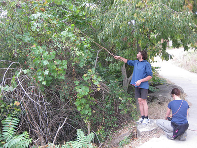 John on a grape hunting expedition, armed with a long stick, climbing tape, and a bucket.