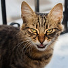 Grrr i'm ferocious! Cats of Kalymnos, they are everywhere