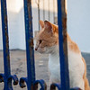 Cats of Kalymnos, they are everywhere