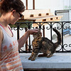 Cats of Kalymnos, they are everywhere, This one suckered Cath in
