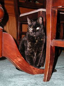 Dorothy under table