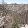 Forêt brulée au dessus des Gorges du TARN
