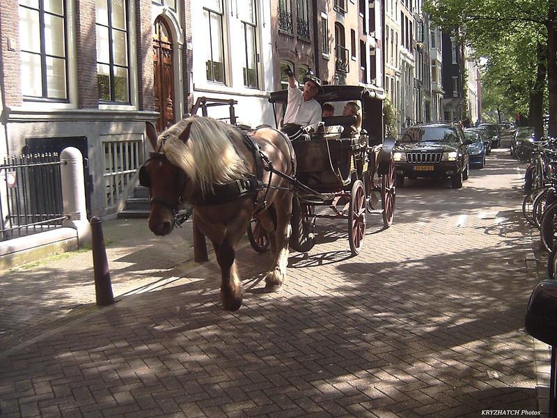 AMSTERDAM - Carriole promenant touristes en ville