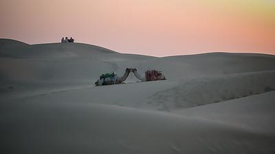In de Thar woestijn