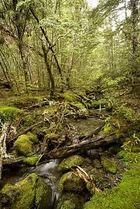 Campground stream