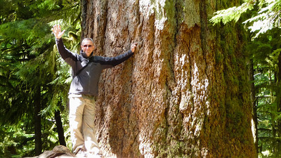 Gigantische ceder in Cathedral Grove