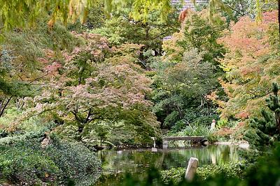 Botanical Garden, Fort Worth, Texas, Japanese Fall Festival, October 2009