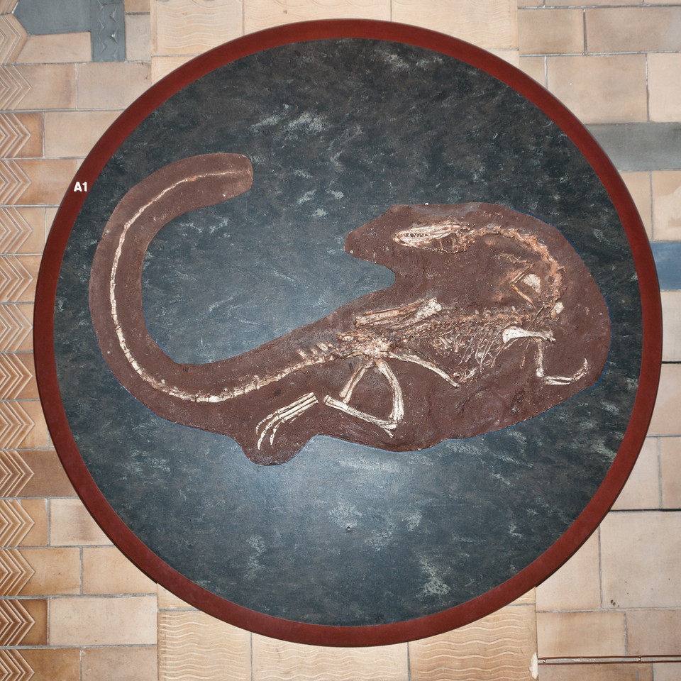 fossil, Natural History Museum, London, England.