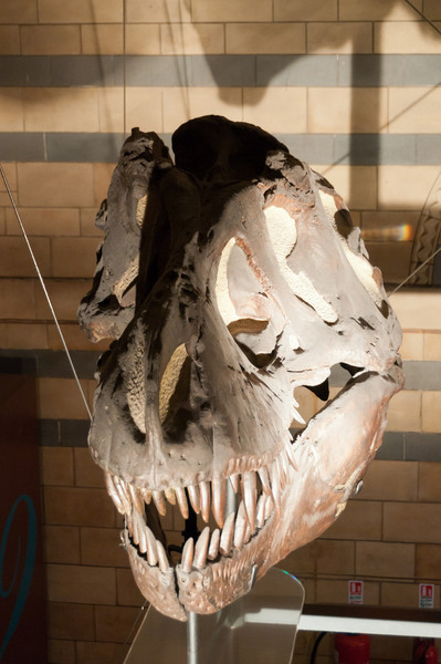 The terror of the jurassic park...<br /> Natural History Museum, London, England.