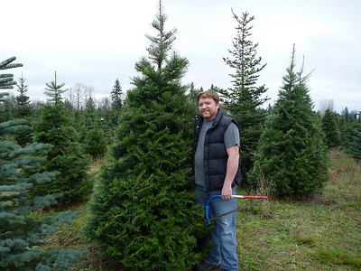 2010, November 27th:  Finding the perfect Christmas Tree