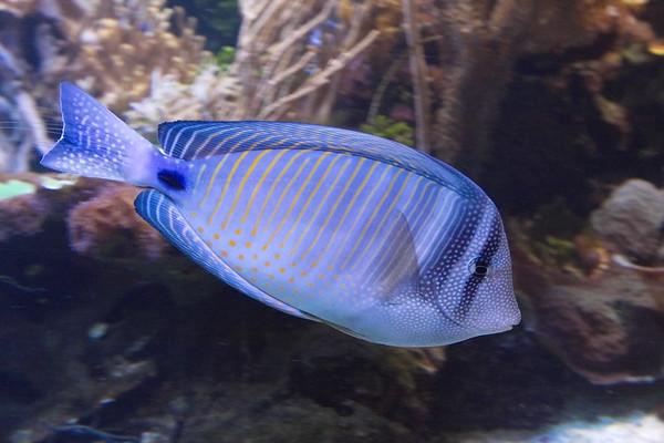 2010-09-15 London Day 2, London Aquarium
