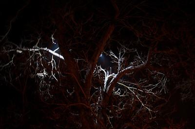 Backlit Tree in Williamsburg