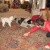 Moorea had a couple of guest dogs come for breakfast and Dusty kept the critters entertained.