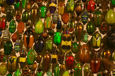 Insectarium - beetles