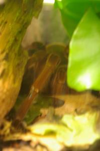 Insectarium - tarantula (hiding)