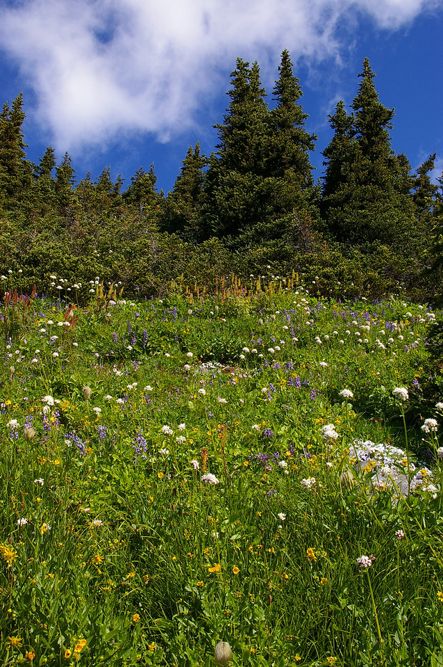 On the high note trail - mountain meadow