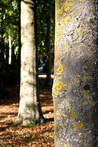 Stowe Tree Trunks