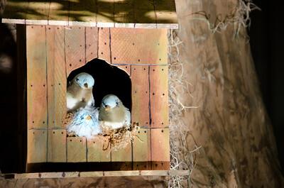 Birds in a birdhouse