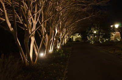 Trees leading to the Bloemendaal House