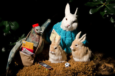 Bunny Family Message