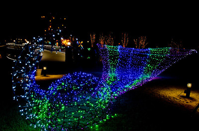 Lighted Peacock
