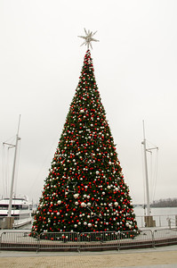 National Harbor Christmas Tree Large Christmas tree on display at the National Harbor